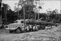 Exploitation forestière au Cameroun. – « La forêt couvre 1/3 du pays. Après l'écrémage des essences précieuses, on procède aujourd'hui à l'exploitation méthodique des essences communes pour le sciage et la satisfaction du marché intérieur dont l'ampleur croit sans cesse. » (1). – La forêt couvre, dans le Cameroun contemporain, après unification des zones sous mandat français et sous mandat britannique, près de 45 % du territoire. S'il est vrai que le marché intérieur de bois d'œuvre s'est considérablement développé dans les années suivant la seconde guerre mondiale, en raison de la construction de nombreux bâtiments modernes à Douala et d'infrastructures dans le sud du pays, les exportations du Cameroun n'ont jamais faibli. Source : (1) (photo et texte) Le Cameroun (dépliant d'information) Agence de la France d'outre mer, Paris, 1951.