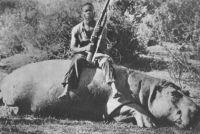 Un hippopotame tué sur les bords du N'zy – Il s'agit apparemment du fleuve N'zi mal orthographié sur cette carte postale.