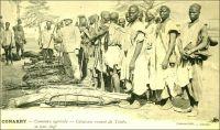 Conakry, concours agricole, caravane venant de Timbo et leur chef. – Dès le début du XXème siècle, l'administration coloniale française s'emploie à développer l'agriculture en Guinée. Pour ce faire, elle créé un droit foncier en 1901 et lance des actions incitatives en direction des notables africains. Les foires agricoles constituent le meilleur moyen pour promouvoir et vulgariser  les techniques, tandis que les concours permettent de récompenser les producteurs méritants. Le premier concours agricole de Conakry a lieu en 1901. Lors du second, en 1902, l'administrateur Noirot, directeur des affaires indigènes, exhorte les producteurs africains à redoubler d'efforts : « Aujourd'hui, le gouverneur réserve sa plus grande considération, non pas aux chefs indigènes qui ont eu une représentation de bravoures dans les combats, mais bien aux chefs qui aideront au plus grand développement des cultures dans leur pays, parce que ceux-là seuls travaillent au bonheur de leur peuple ». Les chefs de canton, à qui s'adresse directement  ce discours, participaient activement aux concours agricoles. Ainsi, le chef de Timbi-Madina vient accompagné d'une suite de deux cents personnes, et celui de Labé est à la tête d'une délégation de plus de mille deux cents personnes. – A lire sur le sujet : Diop, Mustapha, Réformes foncières et gestion des ressources naturelles en Guinée: enjeux de patrimonialité et de propriété dans le Timbi au Fouta Djalon, Paris, Karthala, 2007.