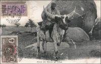 Bœuf des marais du Tchad. - « Avant les années 30, le bœuf-porteur était utilisé pour le transport de l'eau ; mais son usage est rendu de plus en plus difficile par la montée des prix des bovins tout au cours des années 20 : les bœufs-porteurs sont très recherchés sur les marchés, sont très bien payés […] L'âne, dont le prix est très bas, peut facilement accomplir les mêmes tâches de transport, n'exige pas de soins particuliers, et est moins délicat et moins exigeant par rapport à la qualité des pâturages. Malgré la baisse du prix des bovins à la fin des années 30, l'usage de l'âne est désormais chose acquise ». Source : Bonfiglioli, Angelo Maliki, Dudal - Histoire de famille et histoire de troupeau chez un groupe de Wodaabe du Niger, Paris, Éditions de la Maison des sciences de l'homme, 1988.