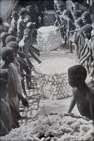 Le Tchad est devenu centre important pour la culture du coton. Des indigènes au travail dans une plantation. - Le développement de la culture du coton, qui représente de nos jours la première production agricole tchadienne hors produits vivriers, relève d'une initiative coloniale. Si sa fibre était utilisée pour la fabrication de textiles depuis longtemps, il était peu cultivé au début du XXème siècle. Victor-Emmanuel Largeau, un des pionniers de la présence française dans cette région, l'évoque dans les notes qu'il a prises lors de son premier séjour au Tchad entre 1902 et 1904 : « Parmi les matières premières nécessaires à l'industrie, on ne trouve que du coton et de l'indigo, parfois cultivés par des immigrants Kanouri ; mais le coton est en grande partie recueilli dans la brousse où il pousse à l'état sauvage. […] Le coton donne lieu à la plus importante industrie [du territoire], celle du tissage de bandes d'étoffes assez grossières, longues de 0m,75 environ sur 0m,05 de largeur, dites « gabak » et servant de monnaie divisionnaire. En rassemblant ces bandes, on confectionne les boubous et pantalons dont s'habillent les Baghirmiens » (1). Lancée au début des années 1930, la culture du coton connait un rapide essor et le gouverneur Pierre-Olivier Lapie, nommé durant la Seconde Guerre mondiale par le Général De Gaule, note en 1941 qu'il fait d'ores et déjà la prospérité de la région de Fort-Archambault et contribue cette année-là aux exportations du Tchad à hauteur de 5000 tonnes (2). Sources : (1) Largeau, Victor-Emmanuel, A la naissance du Tchad 1903-1913, Saint-Maur, Editions Sépia, 2001. (2 et photo) Lapie, Pierre Olivier, Mes tournées au Tchad, Londres, John Murray, 1941.