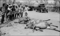 Tambacounda, camp de base du chantier de la piste de Tambacounda à Sambaïlo (Guinée française), travaux menés par l'armée entre 1946 et 1947. Ici le chasseur chargé d'approvisionner les troupes en viande posant devant ses prises du jour. En arrière plan on peut remarquer un camion Citroën T45, modèle qui connut un certain succès au Sénégal.