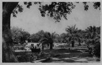 Bamako, parc zoologique - postée en 1945