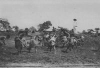 Dahomey, équipe travaillant sur la voie de chemin de fer, vers 1912 – En 1948, le chemin de fer Bénin-Niger compte 68 gares le long de ses 685 km de voies, dont 579 de voie métrique et 106 de voie de 0 m 60. Le fret transporté atteint, en 1946, 90 485 t et 810 483 passagers ont emprunté les lignes qui vont de Cotonou à Parakou, de Cotonou à Pobe par Porto-Novo et de Cotonou à Segboroué vers Athiémé.